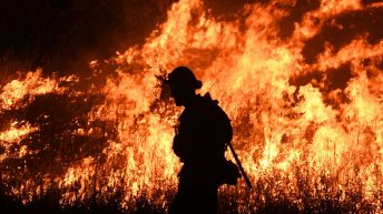 How You Can Help Australia During Wildfire Crisis
